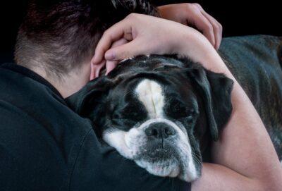 Dog Dog Face Hug Person Poor Pet Animal